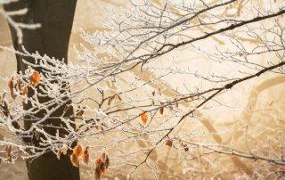 Winters weer