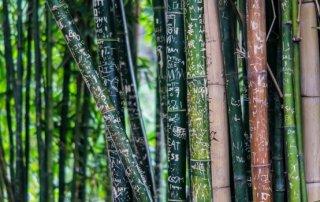 bamboe gebruikt voor bamboe gordijnen